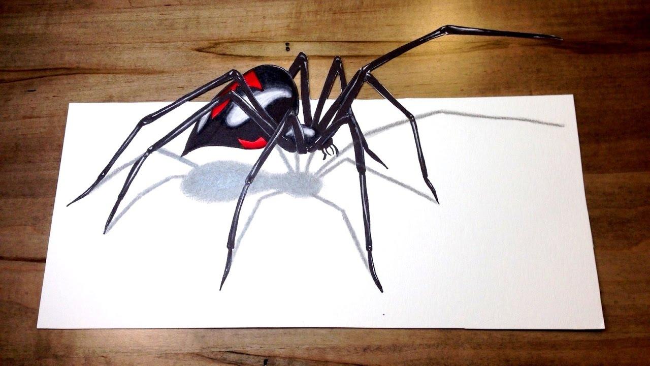Realistic black widow drawing