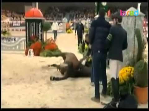Muerte del mejor caballo del mundo durante una competición