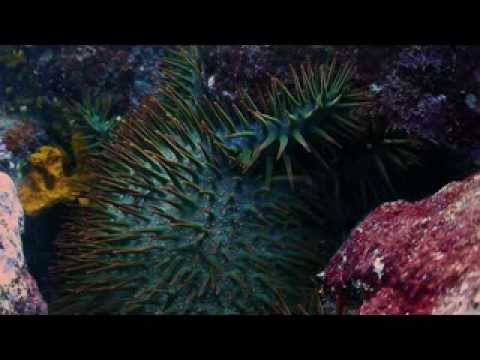 TRAILER: The Jewel of the Ocean - American Samoa