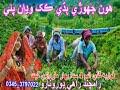 Hoon Jhori Bhade Kakh Wadan Payi Fozia Gudi Old Album  HD thumbnail