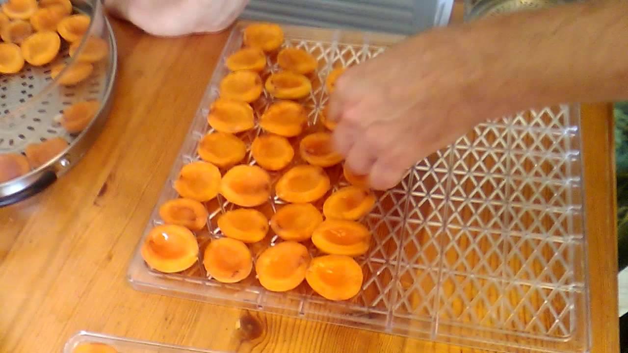Как засушить абрикосы в домашних условиях на зиму 104