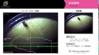 ハイスピードカメラ+データロガー 「ショウジョウバエの観察」