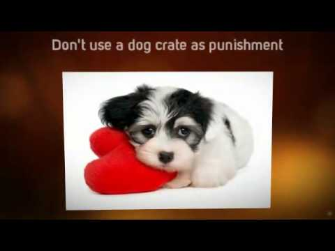 Puppy Potty Training Tips | Tips For House Training a Puppy | Tips on