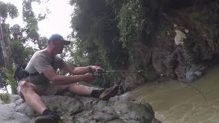 sebarau hutan 山河游、水马骝