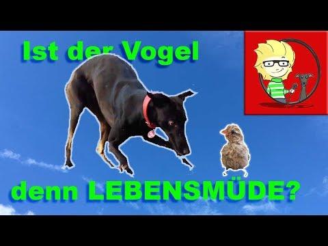(FOLGE 22) Wanderurlaub mit Hund II - ein Vogel ist lebensmüde!