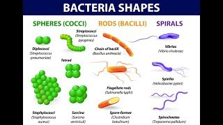 Microbiology of Bacterial Morphology & Shape