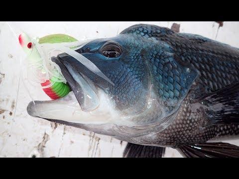 Big Sea Bass Slam! Mixed Bag Jig Fishing