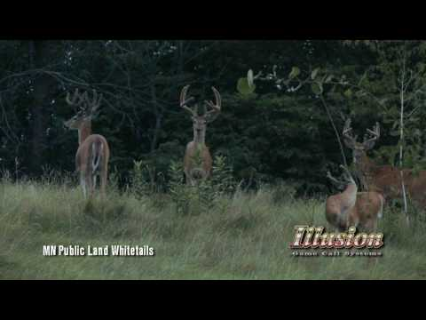 Giant Velvet Bucks - MN Public Land 2010 Video