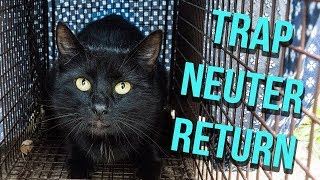 How to Trap a Feral Cat for TNR