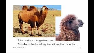 Animals - truyen ngan tieng anh cho tre em