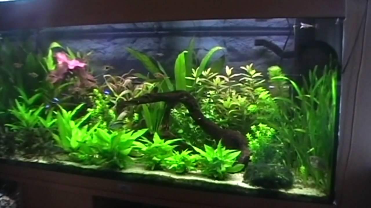Jan Albert zijn aquarium   YouTube