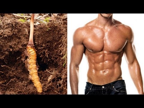 Indian viagra made from zombie caterpillar fungus