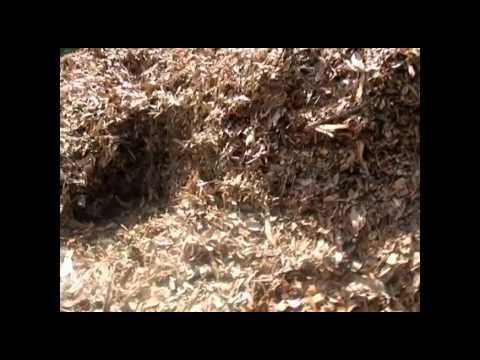 HEATING UP COMPOST PILE : Composting Forum