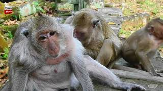 Popeye not happy at all with Spoil Sweet, he looks bored to the group Youlike Monkey 329