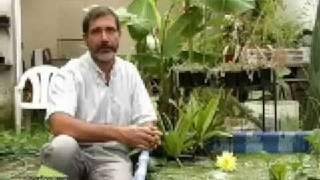 ficha tecnica plantas acuaticas 30 ago 2008