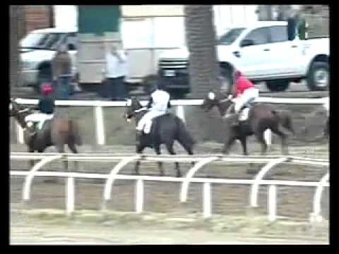Vidéo de la course PMU PREMIO ESTIMABLE