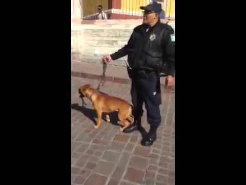 Policías de Guanajuato arrestan a un señor que paseaba a su perro