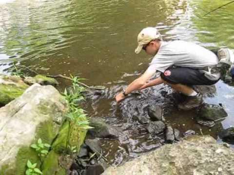 Pymatuning creek carp fishing youtube for Pymatuning fishing report