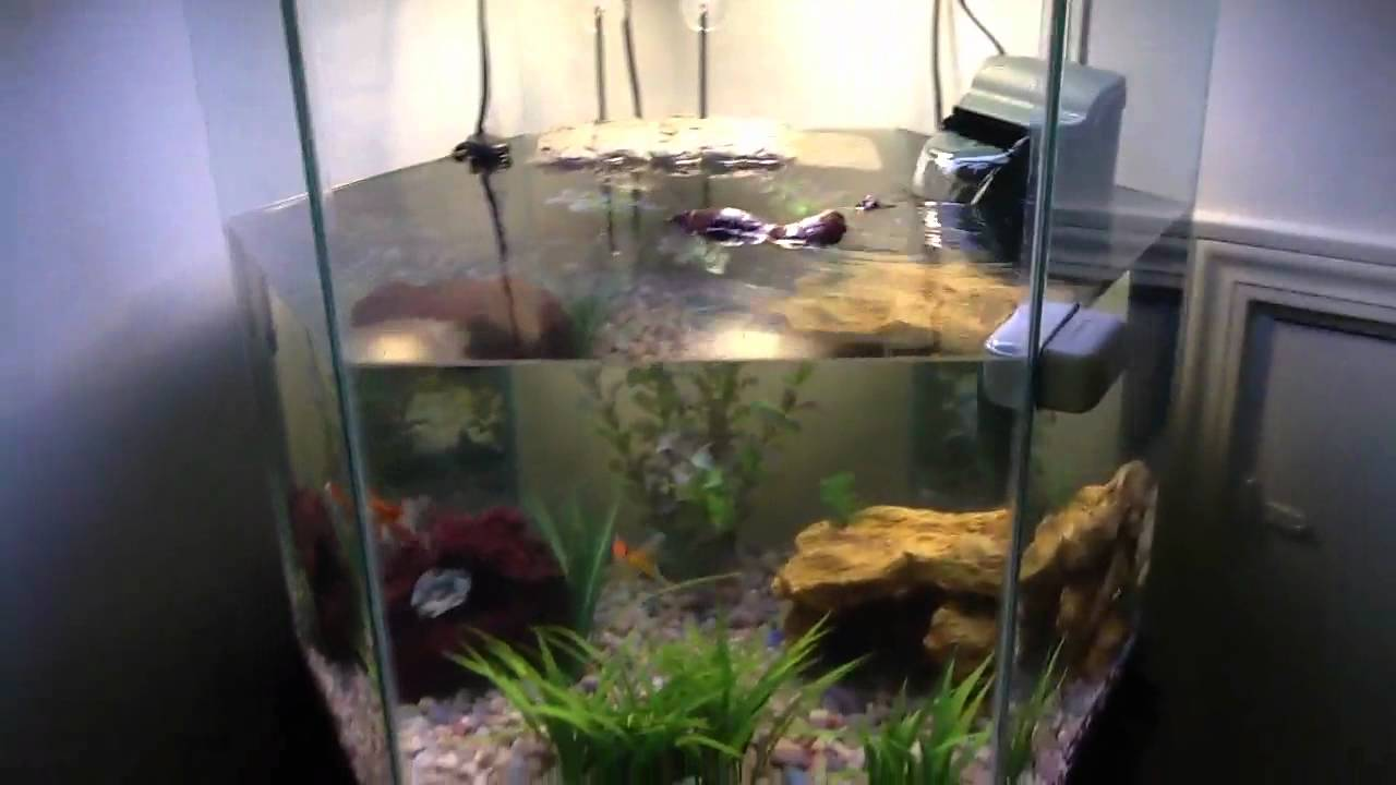 My AWESOME turtle tank!!! - YouTube