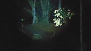 Kuburan Baron 🔴 Siboen Live streaming
