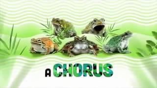 Amphibians: Now at Shedd