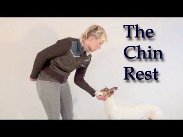 Teaching a Calm Chin Rest - clicker dog training