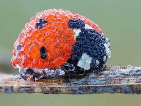 Fotografias Macro De Criaturas Diminutas