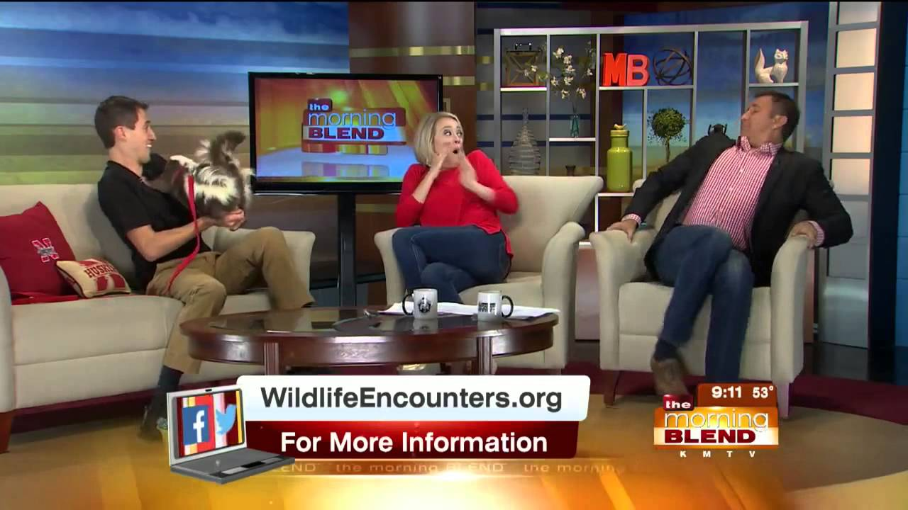 "[""That's The Last Time You're Coming On The Show!"" Skunk Prank Angers TV Host] Video"