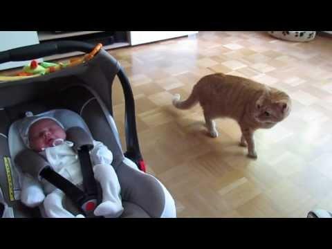 初めて人間の赤ちゃんを見...