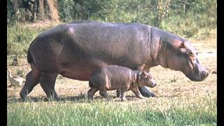 Sa invatam animalele - Part 2- Animalele salbatice.wmv