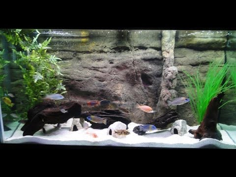 90 Gallon Before & After 3D Background African Cichlid Malawi