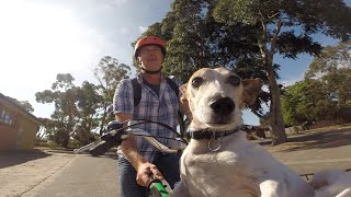 Electric bikes vs a fairly cute dog.