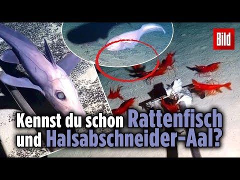 Diese 30 Unterwasser-Tiere wurden jetzt erst entdeckt