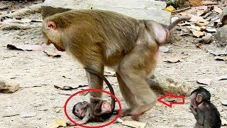 OMG ...very wonder with this action - What Pigtail monkey doing on Lori baby monkey.World Monkey.