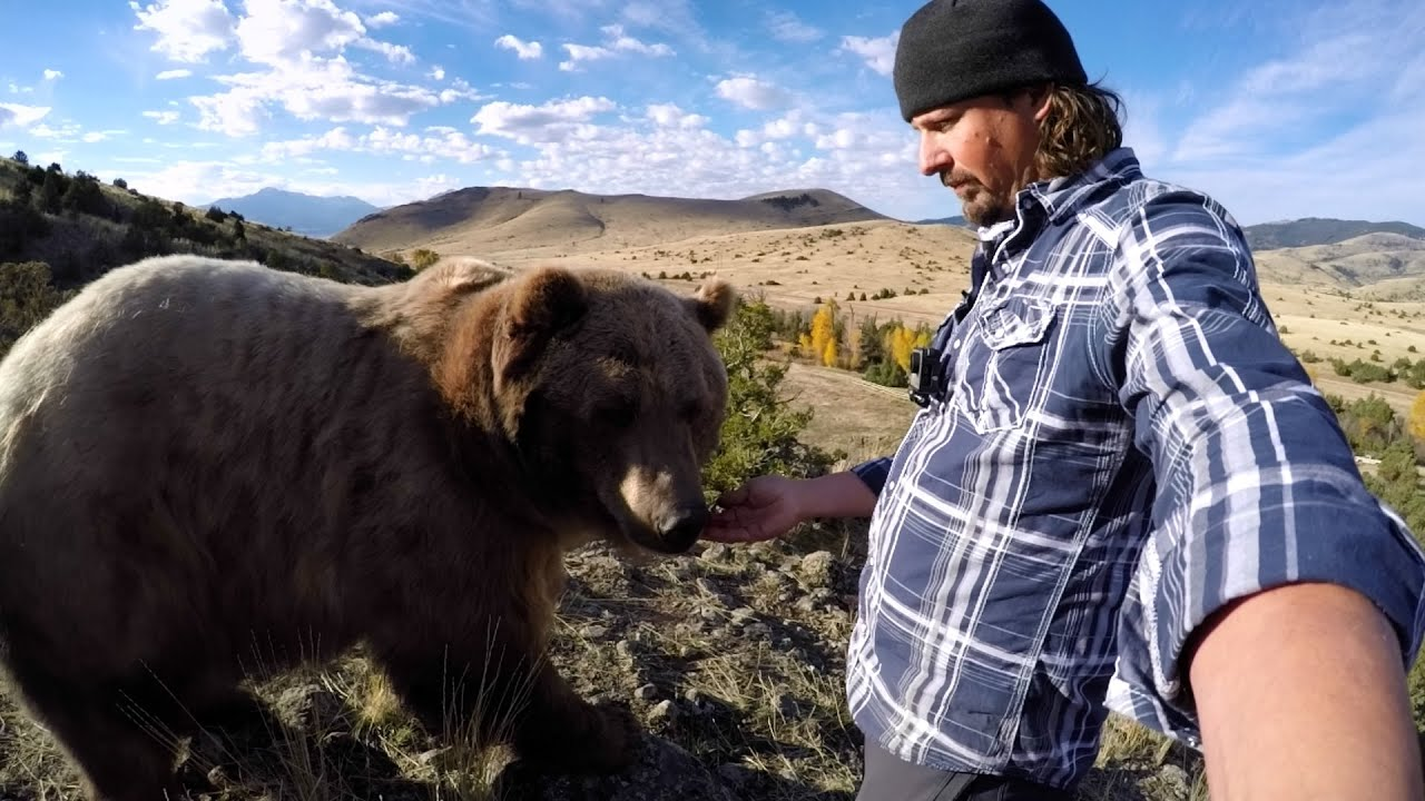 Pet grizzly bear brutus