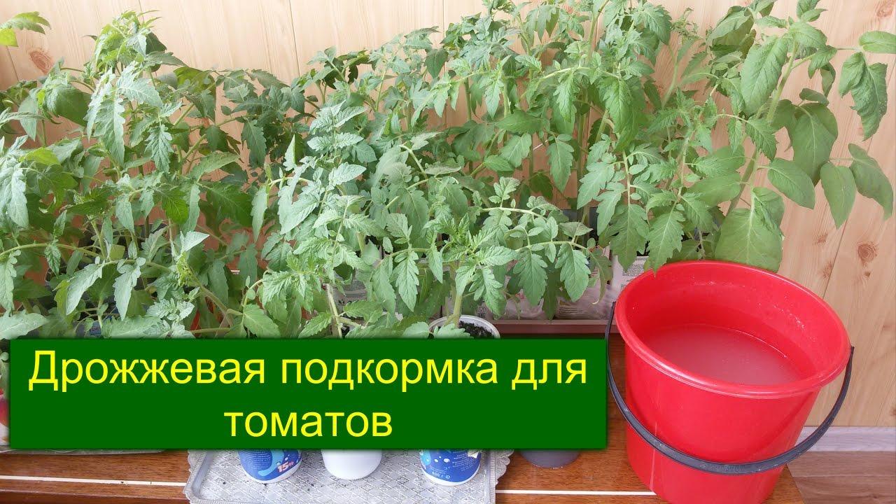 Удобрение для рассады из дрожжей