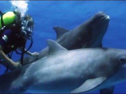 Swimming with dolphins - Úszás delfinekkel