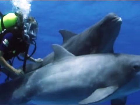 Swimming with dolphins - Born to Be Wild: Dolphins with Tamzin Outhwaite - BBC Video