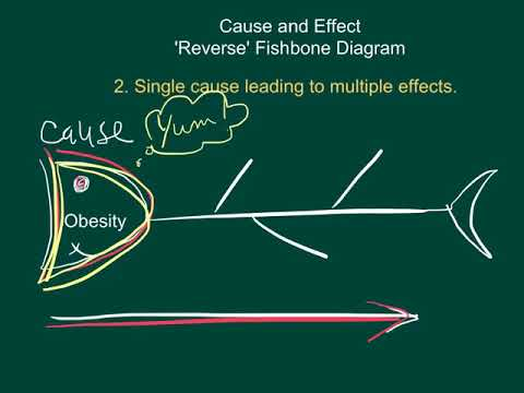 Cause and Effect Fishbone Diagrams