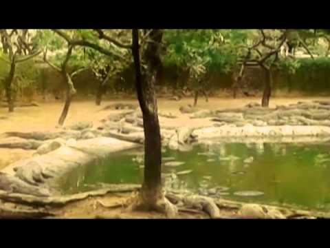Travelogue - Crocodile Bank Chennai (2015)