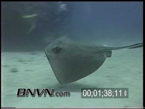 5/4/2002 Dry Tortugas, FL scuba diving footage outside TER