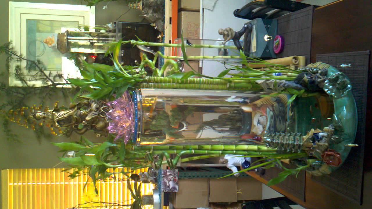 Lucky Bamboo Aquarium Lucky Bamboo Fish Tank