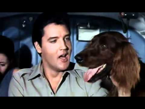 Elvis Presley - A Dog's Life