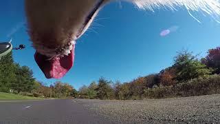 Dog Entertainment - Dog Relaxation - Dog Music - Husky Dog Chase Films FurWheeling
