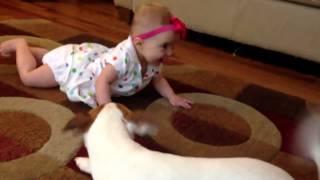 Dog teach baby to crawl - Собака учит ребенка как нужно ползать