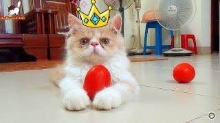 Cats Balancing Fruits On Their Paws  Awesome Cat !!!   Meo Cover Home