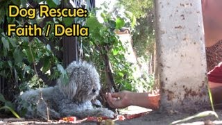 Rescuing a dog from life on the side of the road.  Please share this video.