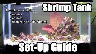 How to Set Up a Shrimp Tank & Shrimp Necessities