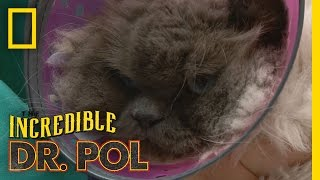 Grumpy Cat | The Incredible Dr. Pol