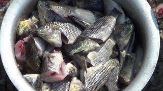 Village Style Cooking of Fish Recipes | FISH Catching Cleaning & Cooking In My Village | STREET FOOD